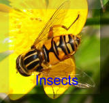 Back To Insects Page