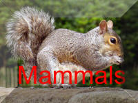 Back To Mammals Page