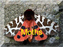 Back to Moths